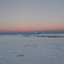 A herd of elk ((Cervus canadensis) grazing under a rising moon near South Park, CO
