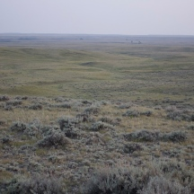 Healthy sage brush steppe as far as the eye can see