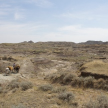 The Sand Arroyo Badlands east of Fort Peck Lake. One place where there is still plenty of bare ground and cactus.