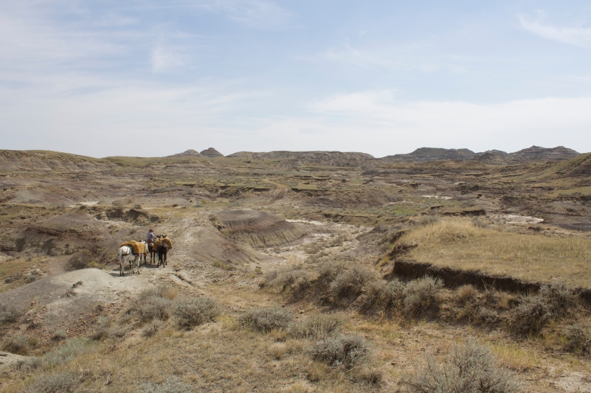 The Sand Arroyo Badlands east of Fort Peck Lake. One place were there is still plenty of bare ground and cactus.