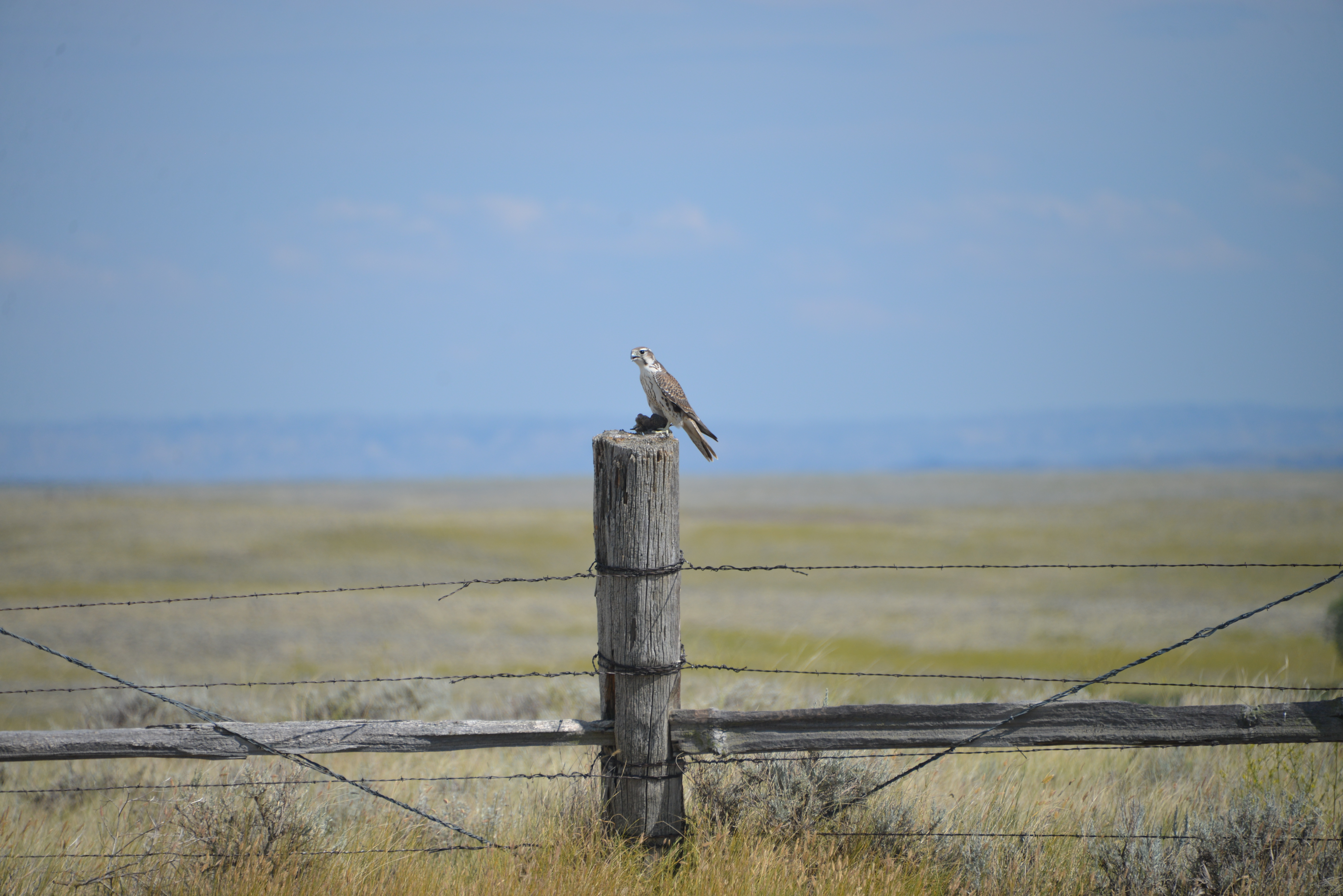 Grasslands | Rediscovering the Great American Prairie
